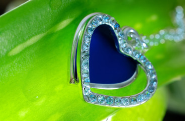 Extremely close-up view of the jewelry on the fresh plant