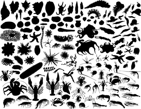 vector silhouettes of mollusks