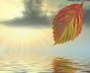 Autumn leaf above water in beams yellow sunset