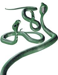 Giftgrüne Schlangen