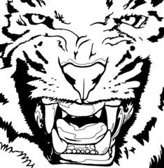 tigre_primo_piano