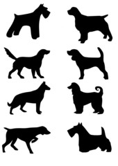 raçãs de cães