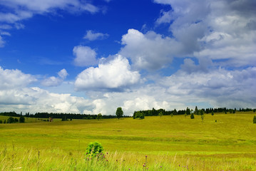 Panorama photo of meadow.