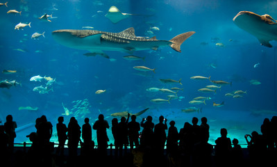 World's largest acrylic aquarium