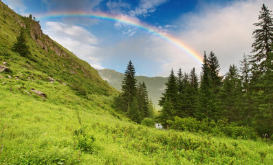 Fototapete - Landscape with forest and rainbow