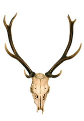 This is horns of deer very well kept
