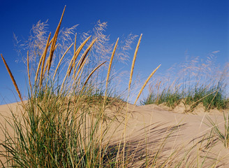 Dune Grass Blows in the Wind on Lake Michigan