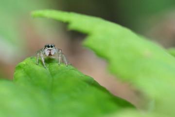 Araignée sur feuille
