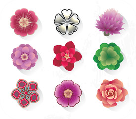 different flowers for design