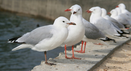 A row of seagulls along the water's edge