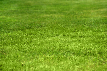 Nice green grass texture form a soccer field