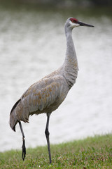 gray crane with broken foot