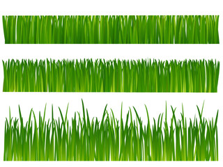 Grass (lawn)