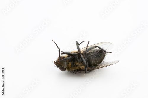 schwarze fliege mit r cken am boden liegend stockfotos und lizenzfreie bilder auf. Black Bedroom Furniture Sets. Home Design Ideas