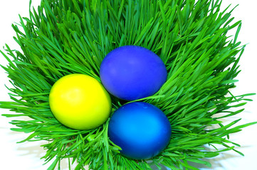 Easter holiday. Color eggs on the grass on white background.