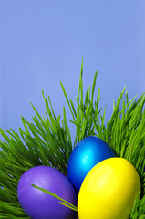 Easter holiday. Color eggs on the grass on blue background.