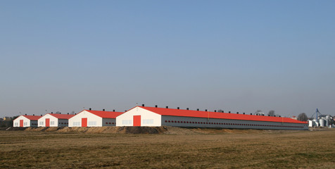 Modern farm poultry buildings. Agriculture in Poland.