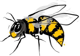 Wasp illustration