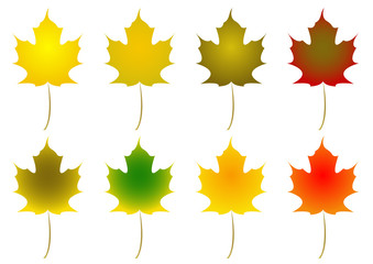 rows of maple leaves