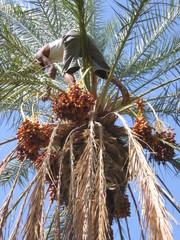 dans le palmier 3