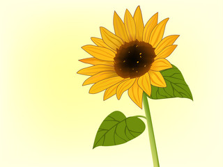 Clip-art of sunflower in bloom