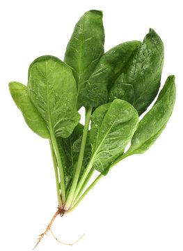 Spinach with root isolated on white background