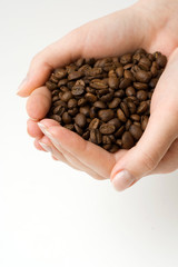 Coffee bean in human hands.