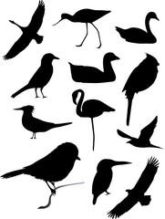 Twelve bird silhouettes