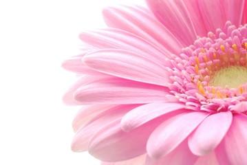 Door stickers Gerbera pink gerbera