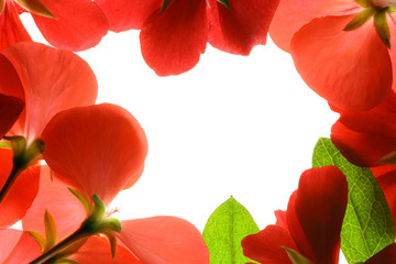 Wall Mural - Red flowers frame isolated on white