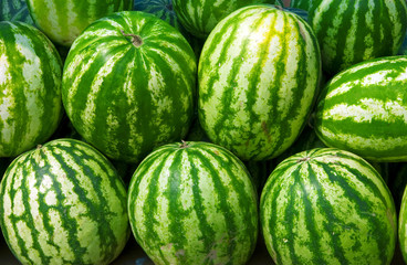 Ripe water-melons with a green striped skin