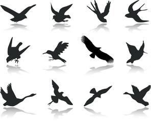 Set icons - 13. Birds. Set of twelve vector icons