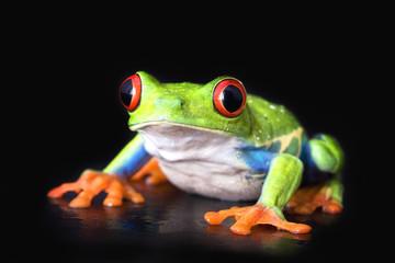 frog closeup on black