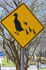 duck caution sign