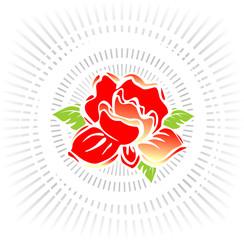 Rose in beams