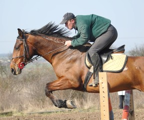 cheval jumping