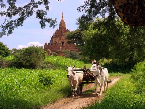 Myanmar vintage landscape