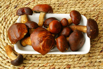 Wild mushrooms (bay bolets)