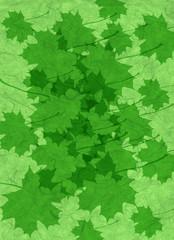 leaves in green