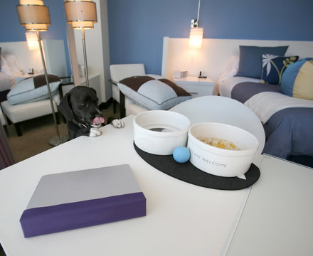 Cute Dog at an upscale pet-friendly hotel