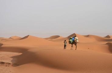 Randonnée chamelière dans le Sahara