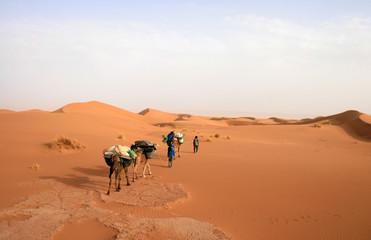 Méharée dans le Sahara marocain