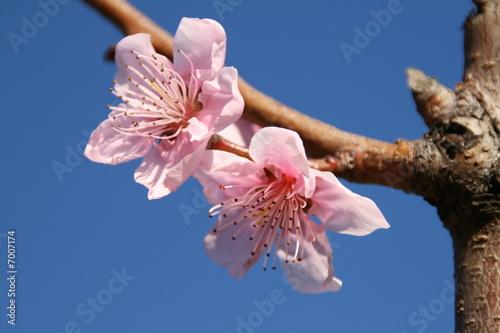 fleurs d 39 avril photo libre de droits sur la banque d 39 images image 7007174. Black Bedroom Furniture Sets. Home Design Ideas