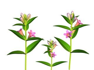Fleurs Gentiana