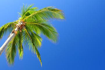 Palm on blue sky background