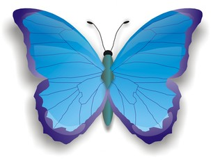 illustration of blue butterfly