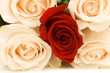 Close up of four white and one red roses