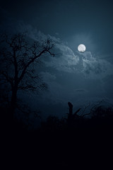 Moon night in forest (collage)