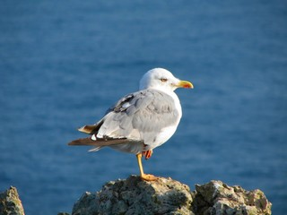 Seagull sitting on the cliff