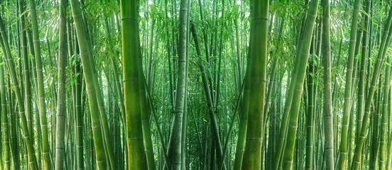 Photo sur Plexiglas Bamboo asian bamboo